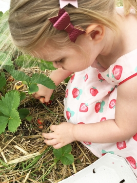 Strawberry picking 03