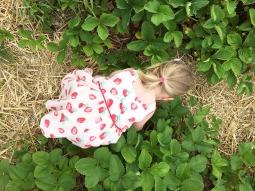 Strawberry picking 04