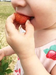 Strawberry picking 05