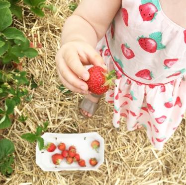 Strawberry picking 06
